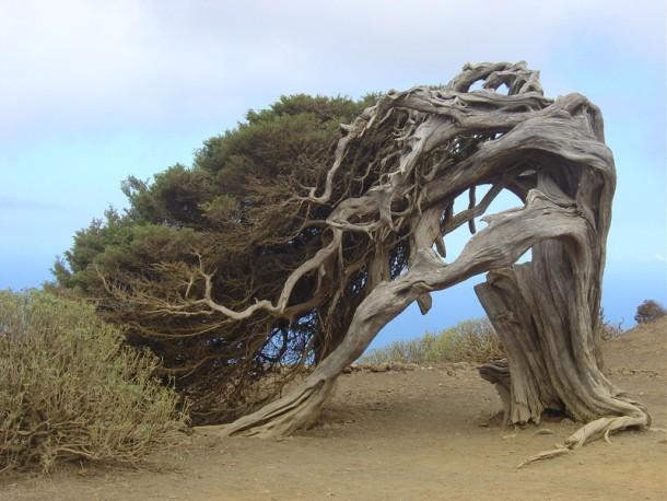 bizarre-tree- (610x458, 85Kb)