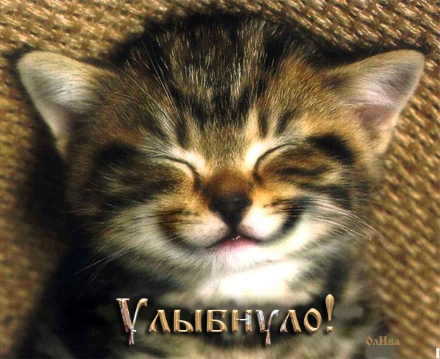улыбнуло-кот (625x510, 117Kb)