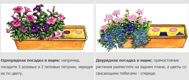 Эти варианты и схемы посадок показывают, какие цветы вам понадобятся для посадки в балконные ящики и как их правильно...