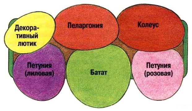 Схемы цветочных композиций для балконных ящиков..., interesnoe. shema5 Украшаем свою жизнь.