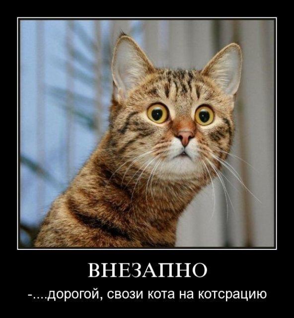 кот (592x640, 50Kb)