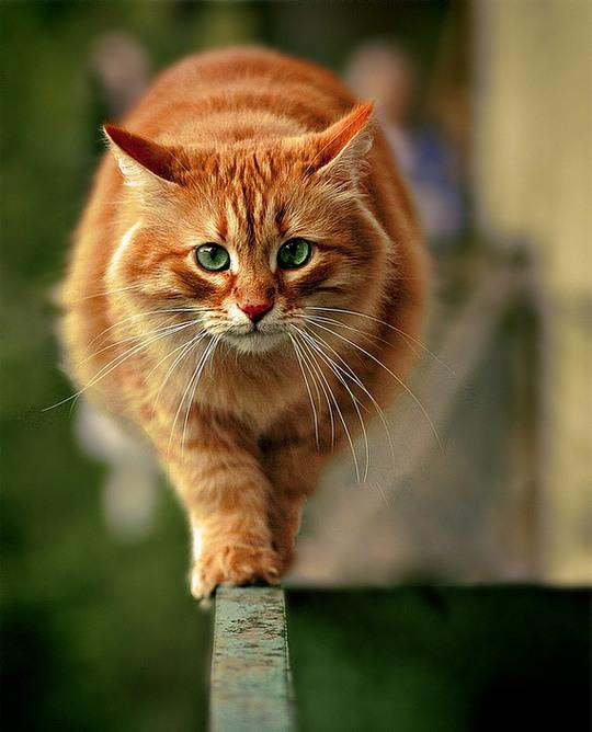 Сравни человек и кот