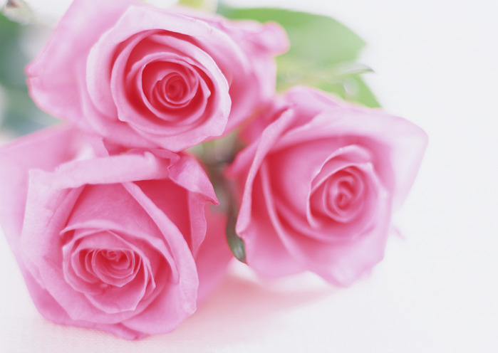 1169242783_flower_27 (700x496, 71Kb)