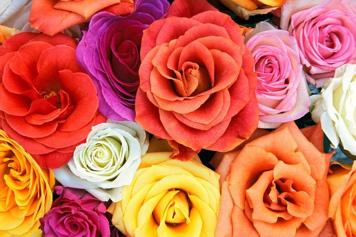lovebloomsroses (700x466, 167Kb)