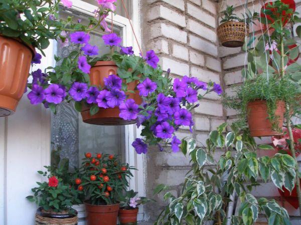 комнатные цветы в о квартире фото - Домашние растения.