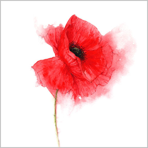 new_gall_poppy_I_copy_for_150 (500x500, 60Kb)