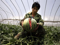 Китайские арбузы (200x150, 14Kb)