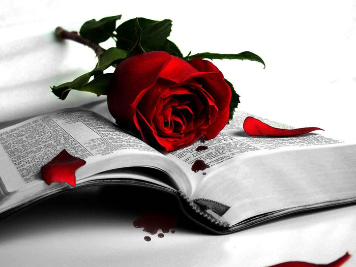 book-rose-red-fall1 (700x525, 198Kb)