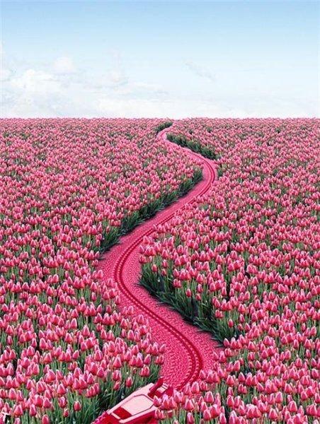 тюльпаны (452x600, 95Kb)