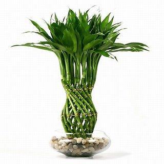 plant (320x320, 15Kb)