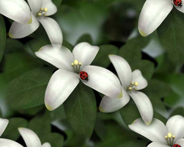 Jasmine копия (600x480, 42Kb)