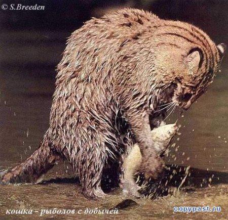 животные | Записи с меткой