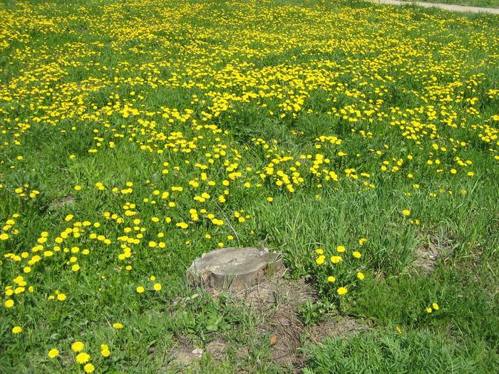 Весна 2011 008 (700x525, 270Kb)