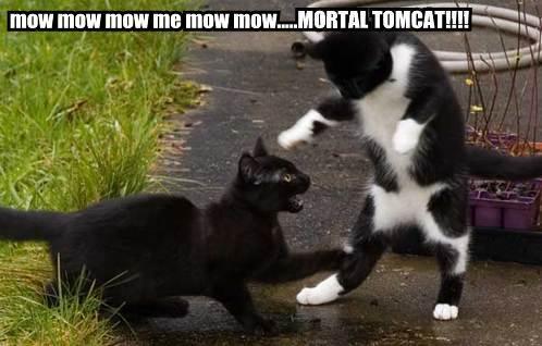 mow-mow-mow-me-mow-mowmortal-tomcat-greg (498x318, 29Kb)