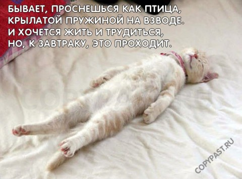 http://img0.liveinternet.ru/images/attach/c/2/74/612/74612446_big.jpg