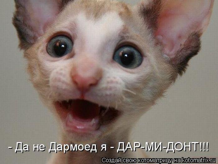 http://img0.liveinternet.ru/images/attach/c/2/74/612/74612524_kotomatrix_06.jpg