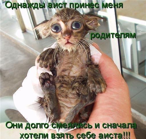 прикольный котенок (для Мира позитива) (512x490, 58Kb)