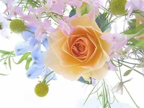 Что мы не знали о цветах и корнях/3352215_1306004470_1 (460x345, 65Kb)