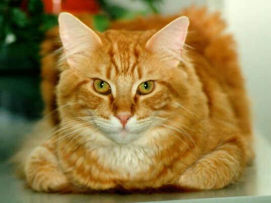3824370_cat1 (535x400, 33Kb)
