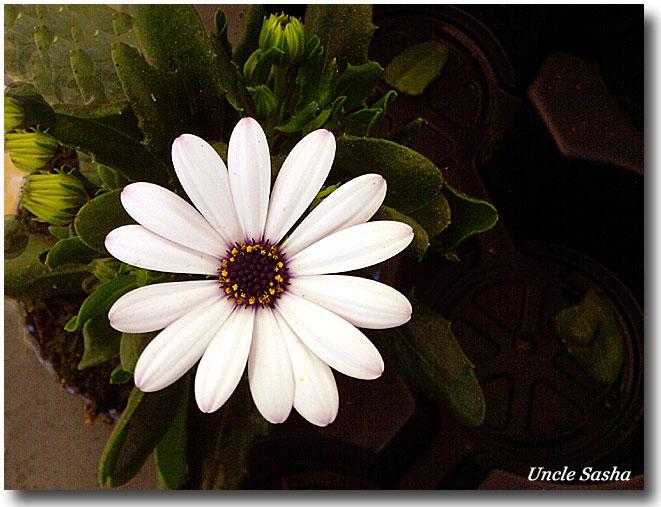 Foto-0040.05.11.3.a (661x507, 87Kb)