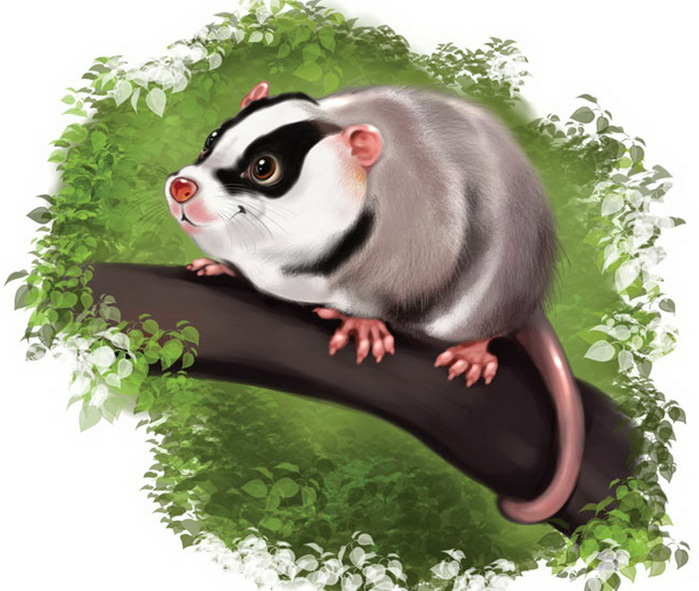 opossum-copy (700x591, 119Kb)