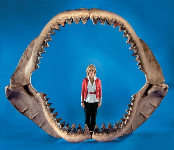 Largest-Shark-Jaws (600x516, 37Kb)
