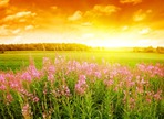 Превью 243405_pejzazh_pole_rasteniya_zakat_oranzhevoe_nebo_oblak (700x507, 155Kb)