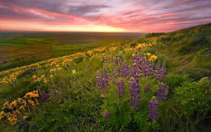 луг, цветы, закат, вечер/4348076_Lyg (700x437, 171Kb)