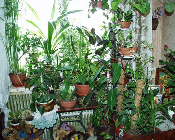 Растения являются одними из самых коммуникабельных.
