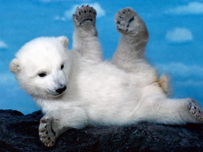 Whoops! Polar Bear (700x525, 268Kb)