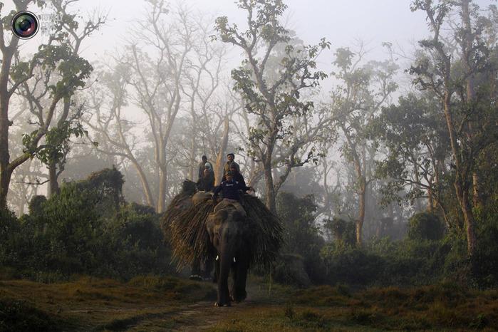 слоны фото