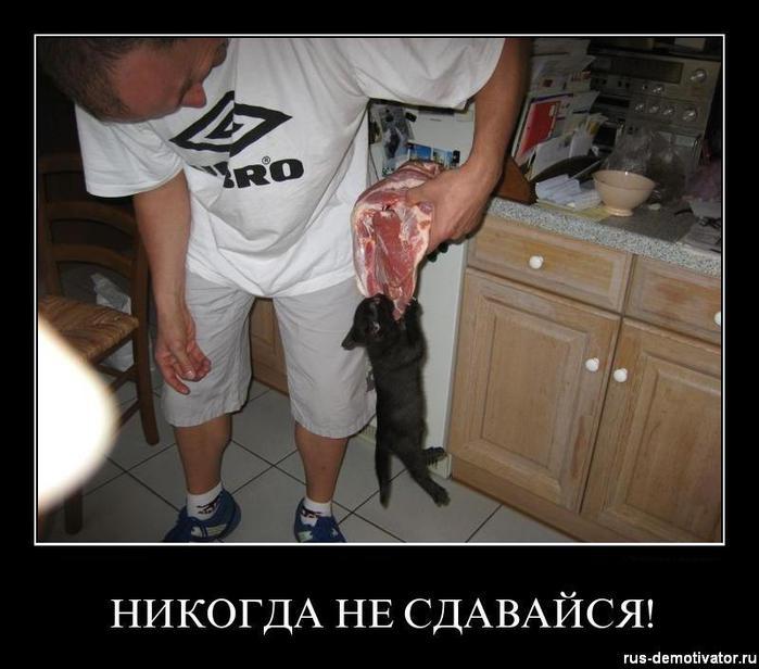 1302414583_nikogda-ne-sdavaysa (700x616, 52Kb)