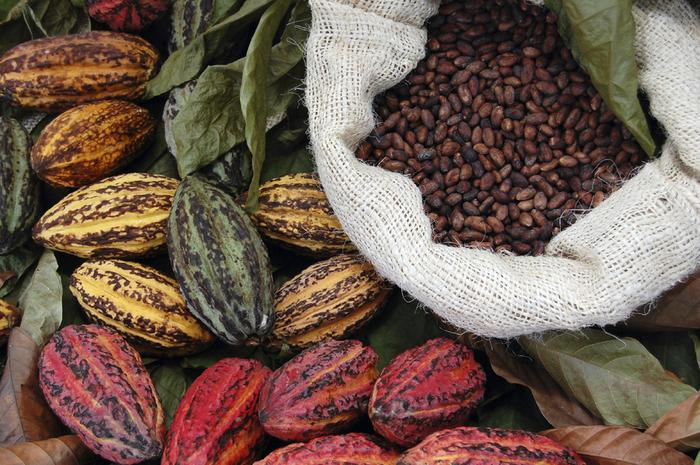 Fave-di-Cacao-e-semi (700x465, 529Kb)