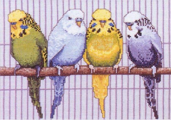 Вышивка крестом волнистые попугайчики 11