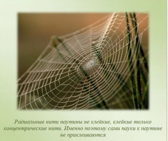 http://img0.liveinternet.ru/images/attach/c/2/82/903/82903190_large_i4.jpg