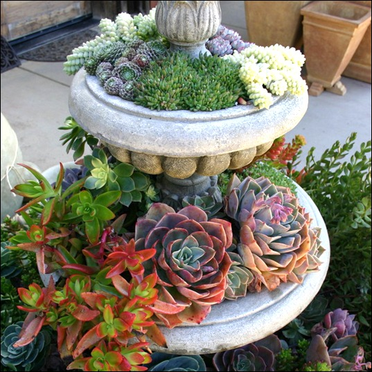 succulent-garden-in-home-and-outdoor_thumb[11] (537x537, 126Kb)
