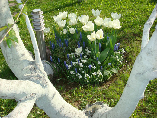 Как и когда посадить цветы в саду красиво