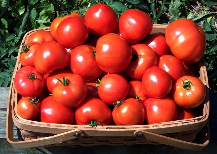 tomato_newsleaks (700x495, 105Kb)