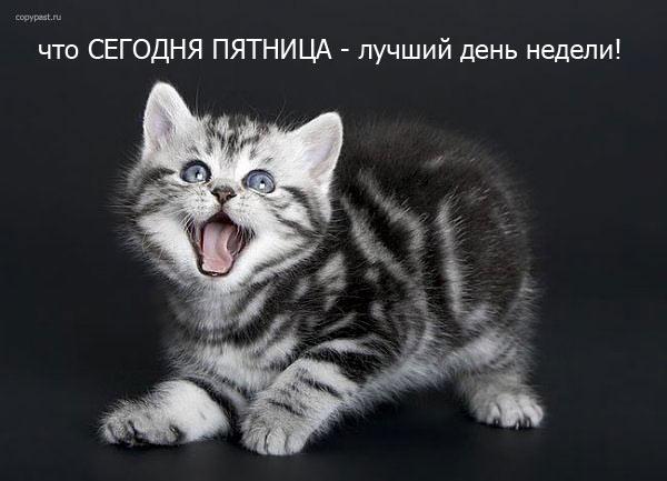 Пятница.... Обсуждение на LiveInternet ...: www.liveinternet.ru/users/791154/post204377570