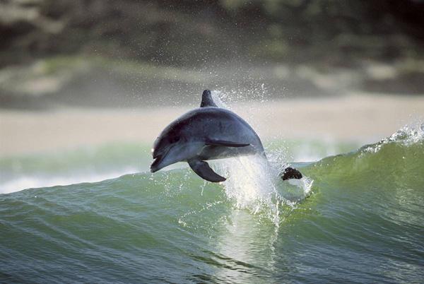 дельфины (600x402, 92Kb)