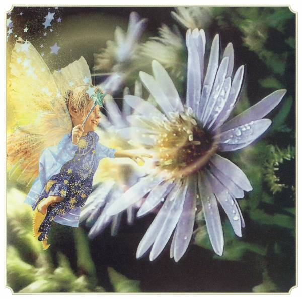 posterlux-cross_tom-kb_cross_tom_aut_new_england_blue_aster_fairy (600x595, 51Kb)