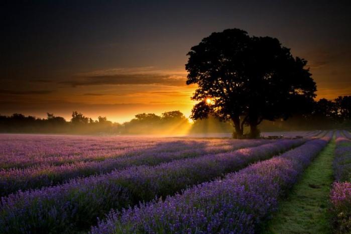 Волшебная красота природы 4 (699x466, 66Kb)