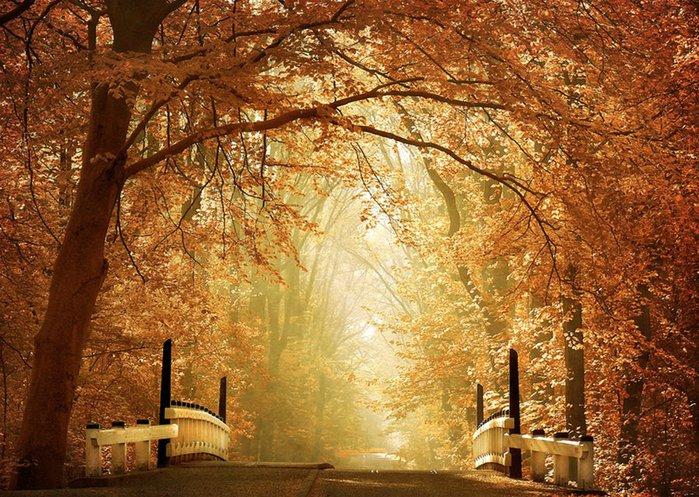 Волшебная красота природы 6 (700x497, 142Kb)