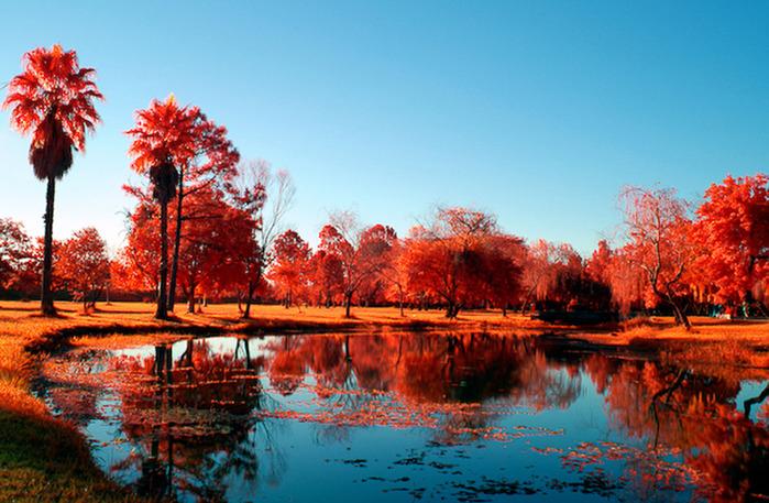 Волшебная красота природы 26 (700x457, 173Kb)