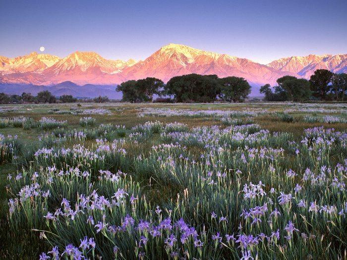 Волшебная красота природы 29 (700x525, 135Kb)