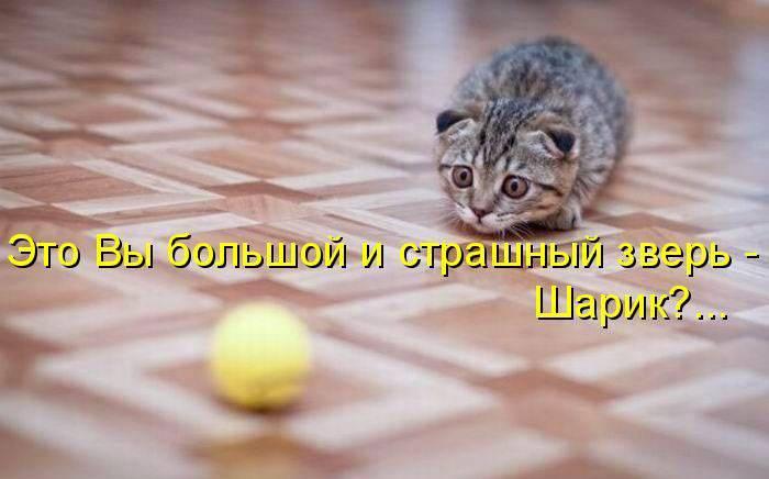 кот3 (700x436, 35Kb)