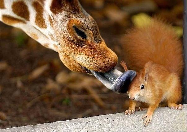 Эти забавные животные!
