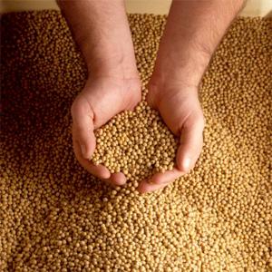 soybeans (300x300, 63Kb)