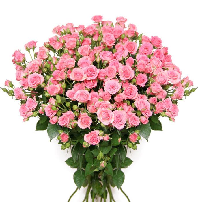 букет роз (686x699, 182Kb)