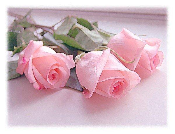 цветы (600x458, 47Kb)
